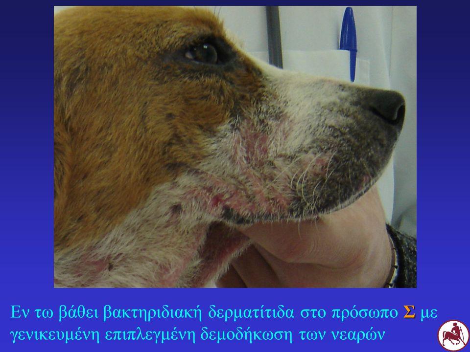 Υποκείμενου αιτίου Συστηματική αντιβακτηριδιακή αγωγή (εκτός: φλυκταινώδη δερματίτιδα νεαρών σκύλων) Τοπική θεραπεία ΓΕΝΙΚΕΣ ΑΡΧΕΣ
