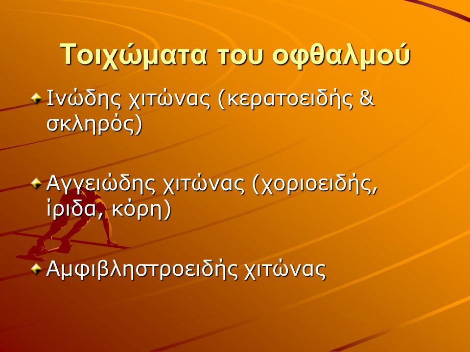 Τοιχώματα του οφθαλμού Ινώδης χιτώνας (κερατοειδής & σκληρός) Αγγειώδης χιτώνας (χοριοειδής, ίριδα, κόρη) Αμφιβληστροειδής χιτώνας