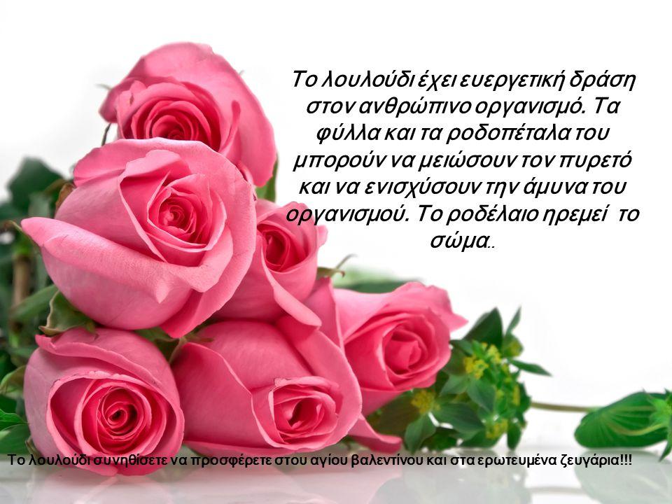 Το λουλούδι έχει ευεργετική δράση στον ανθρώπινο οργανισμό. Τα φύλλα και τα ροδοπέταλα του μπορούν να μειώσουν τον πυρετό και να ενισχύσουν την άμυνα