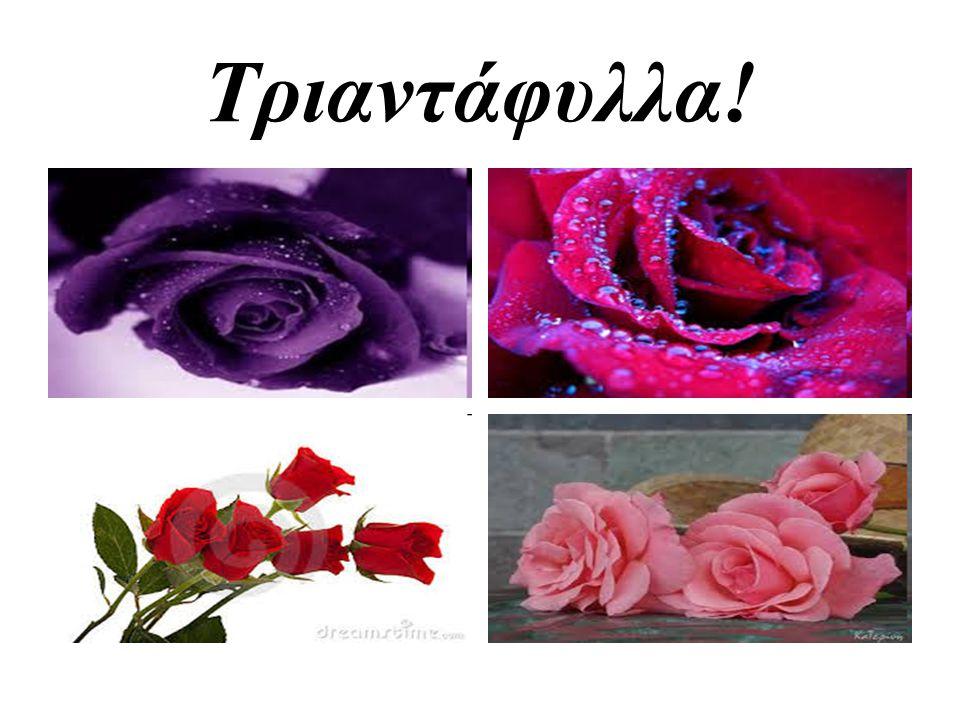 Τριαντάφυλλα!