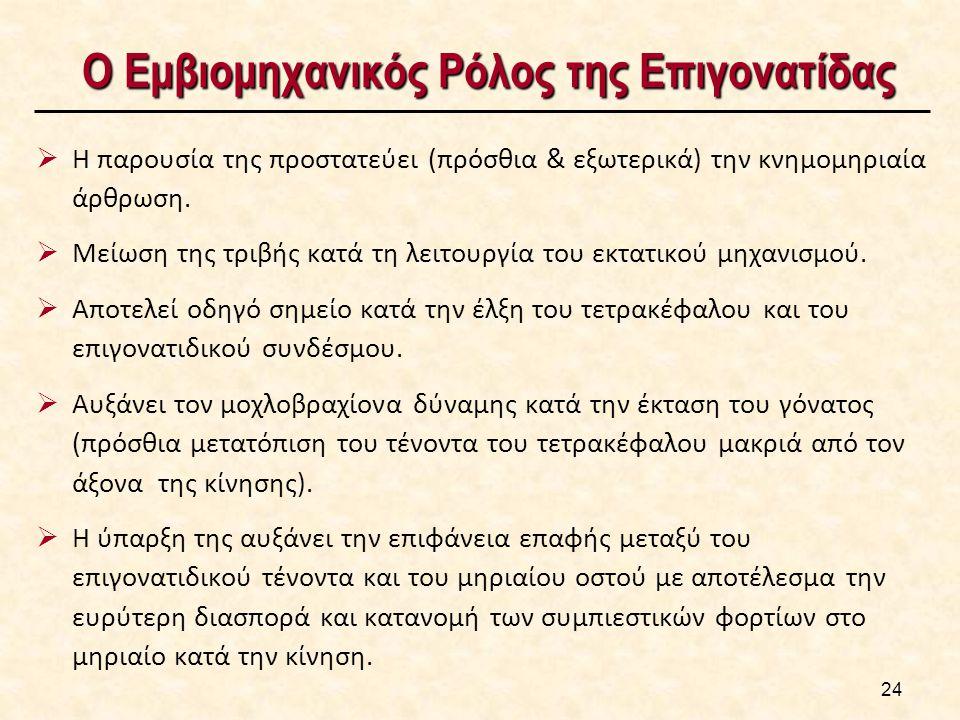 Ο Εμβιομηχανικός Ρόλος της Επιγονατίδας Ο Εμβιομηχανικός Ρόλος της Επιγονατίδας  Η παρουσία της προστατεύει (πρόσθια & εξωτερικά) την κνημομηριαία άρθρωση.