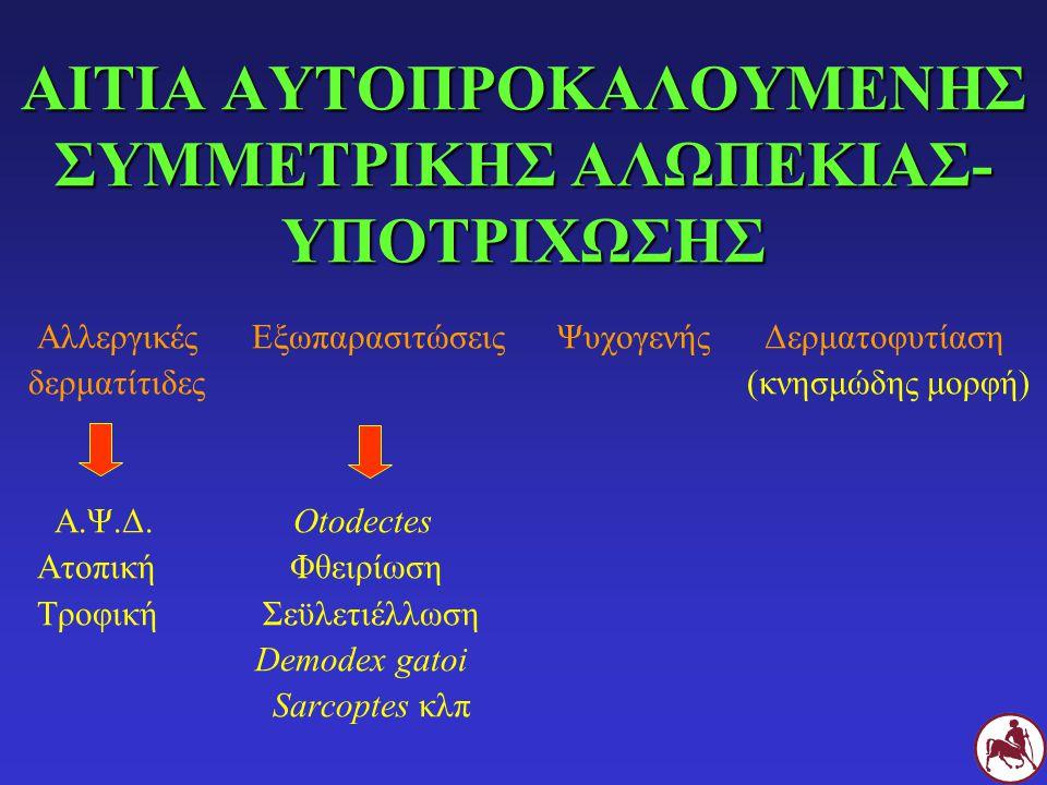 ΑΙΤΙΑ ΑΥΤΟΠΡΟΚΑΛΟΥΜΕΝΗΣ ΣΥΜΜΕΤΡΙΚΗΣ ΑΛΩΠΕΚΙΑΣ- ΥΠΟΤΡΙΧΩΣΗΣ Αλλεργικές Εξωπαρασιτώσεις Ψυχογενής Δερματοφυτίαση δερματίτιδες (κνησμώδης μορφή) Α.Ψ.Δ. O