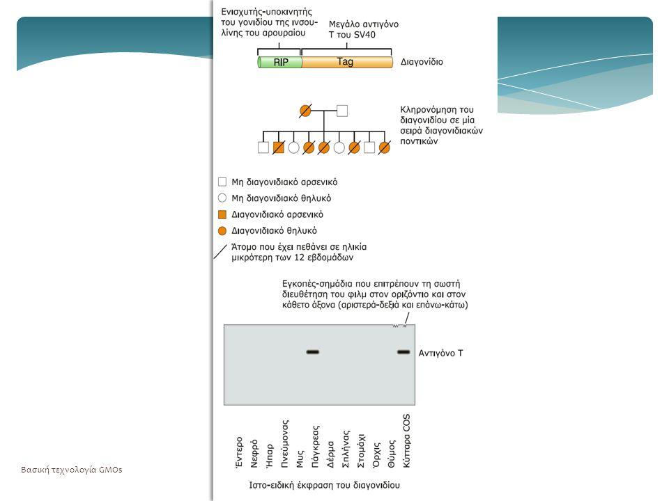  Ανθεκτικότητα σε αντιβιοτικά  Χρωματικοί δείκτες  β-γαλακτοσιδάση/X-gal  Green Fluorescent Protein  β-γλυκουρονιδάση Βασική τεχνολογία GMOs19 Επιλέξιμοι γενετικοί δείκτες
