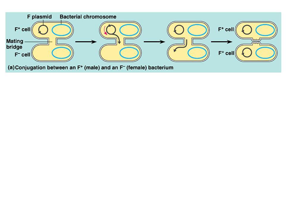 Βασική τεχνολογία GMOs28 Βακτηριοφάγοι