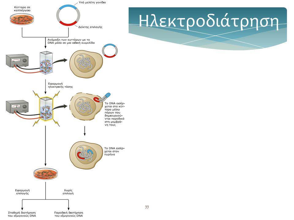Βασική τεχνολογία GMOs34 Χρήση λιποσωμάτων