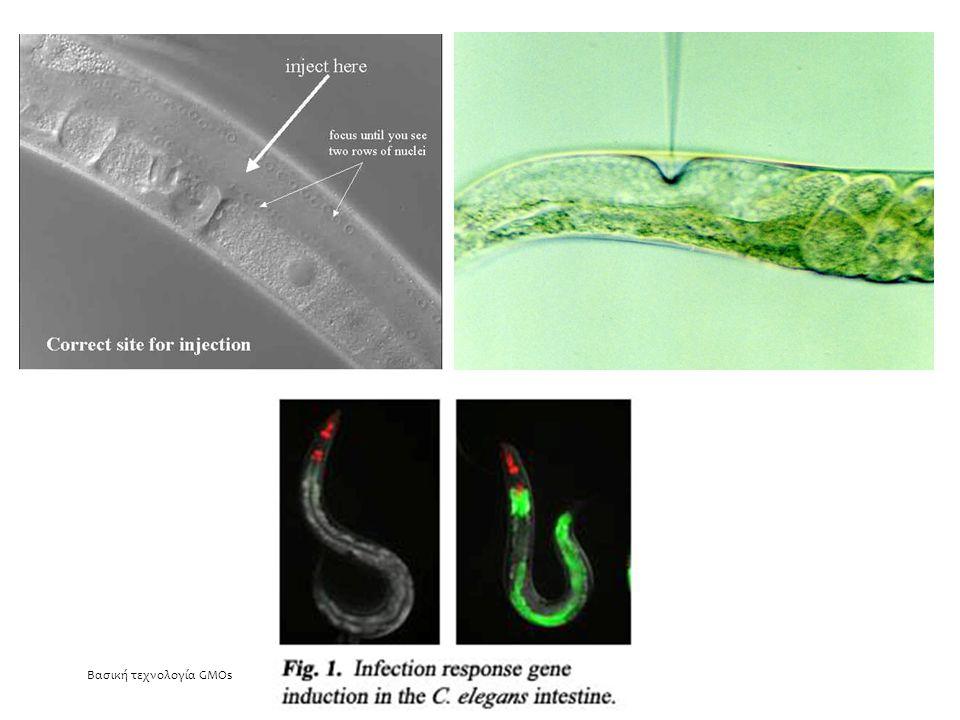Ιστοειδική έκφραση γονιδίων