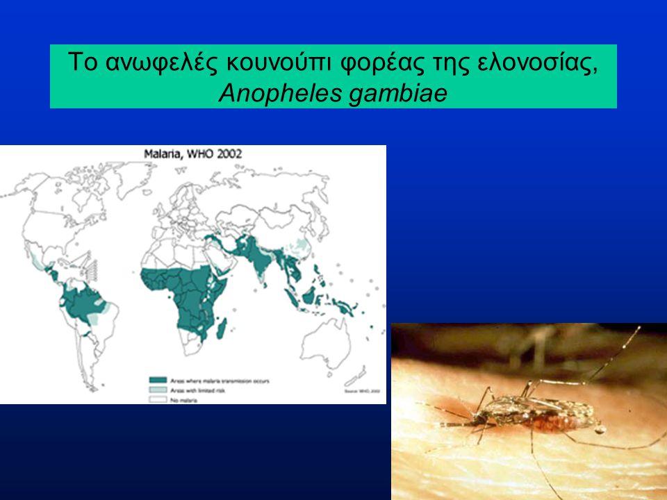 Ο κύκλος ζωής της ελονοσίας