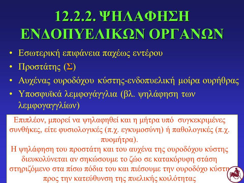 12.2.2. ΨΗΛΑΦΗΣΗ ΕΝΔΟΠΥΕΛΙΚΩΝ ΟΡΓΑΝΩΝ Εσωτερική επιφάνεια παχέως εντέρου ΣΠροστάτης (Σ) Αυχένας ουροδόχου κύστης-ενδοπυελική μοίρα ουρήθρας Υποσφυϊκά