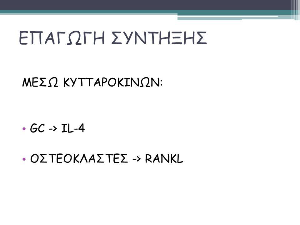 ΕΠΑΓΩΓΗ ΣΥΝΤΗΞΗΣ ΜΕΣΩ ΚΥΤΤΑΡΟΚΙΝΩΝ: GC -> IL-4 ΟΣΤΕΟΚΛΑΣΤΕΣ -> RANKL