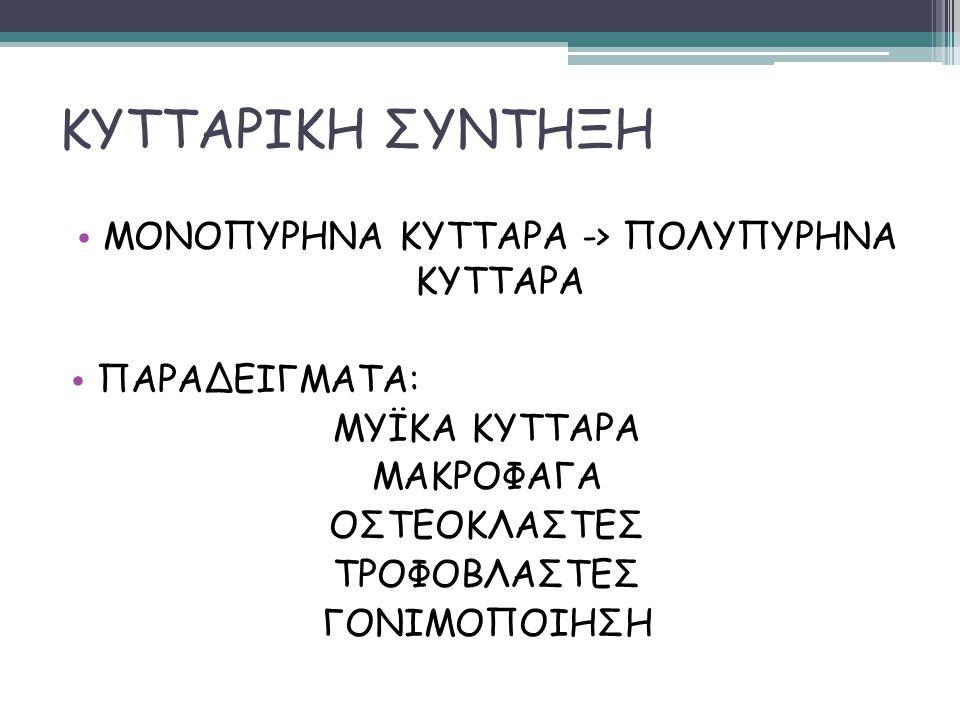 ΚΥΤΤΑΡΙΚΗ ΣΥΝΤΗΞΗ ΟΜΟΤΥΠΗ ΠΑΡΑΓΩΓΑ ΕΤΕΡΟΤΥΠΗ HETEROKARYON SYNKARYON