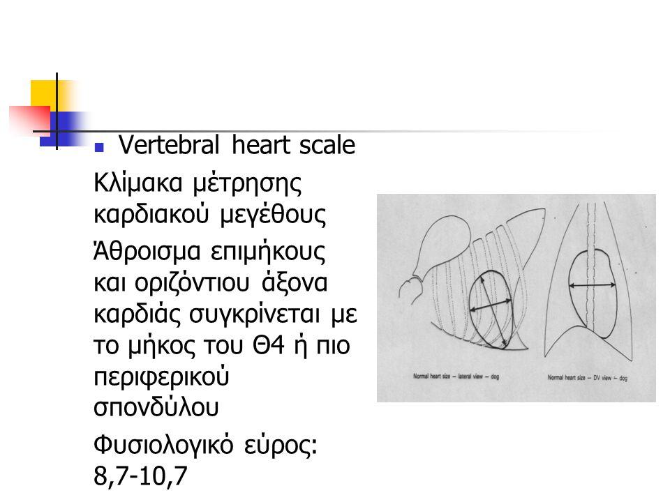 Vertebral heart scale Κλίμακα μέτρησης καρδιακού μεγέθους Άθροισμα επιμήκους και οριζόντιου άξονα καρδιάς συγκρίνεται με το μήκος του Θ4 ή πιο περιφερ