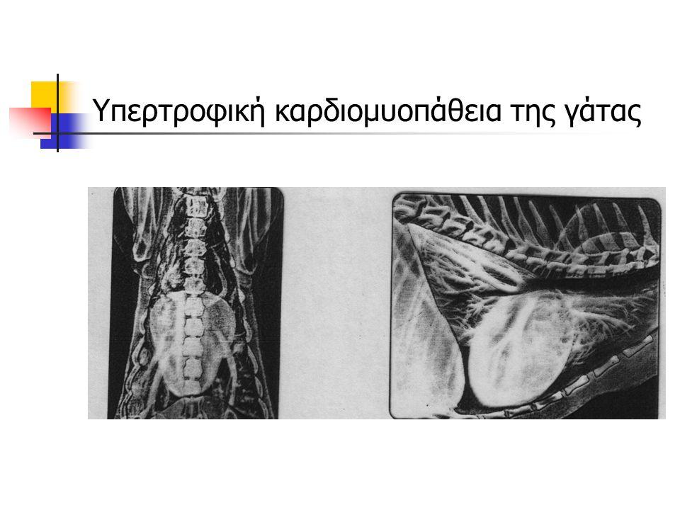 Υπερτροφική καρδιομυοπάθεια της γάτας