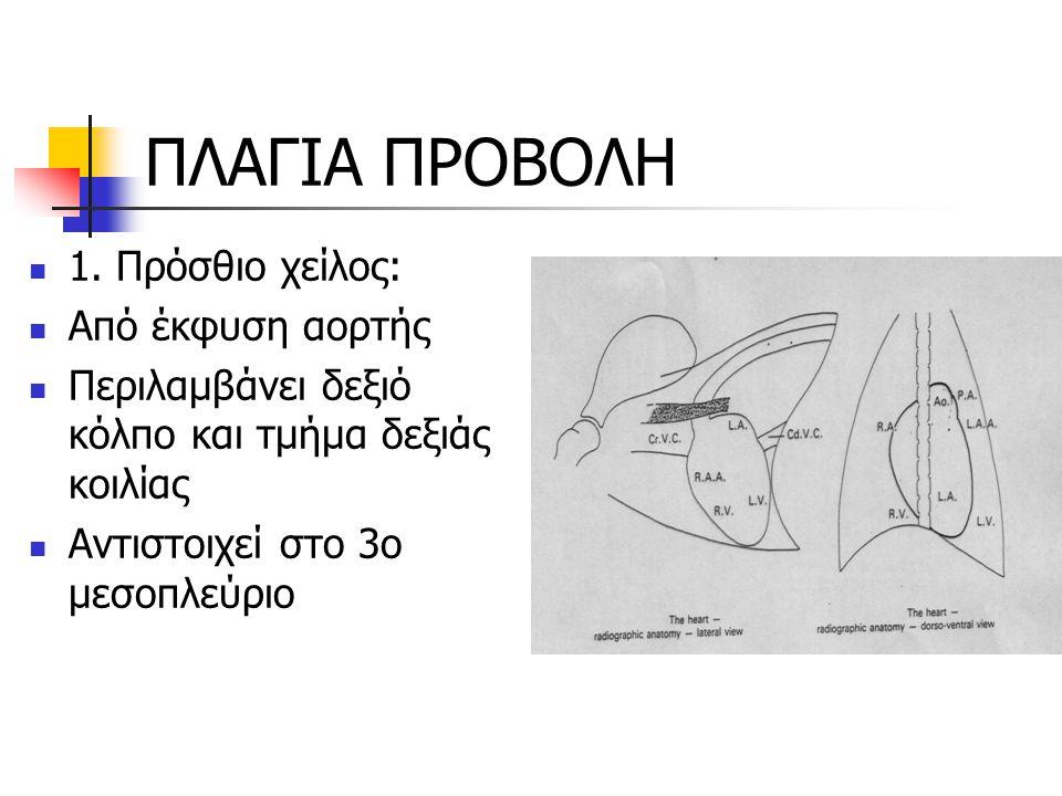 ΠΛΑΓΙΑ ΠΡΟΒΟΛΗ 1. Πρόσθιο χείλος: Από έκφυση αορτής Περιλαμβάνει δεξιό κόλπο και τμήμα δεξιάς κοιλίας Αντιστοιχεί στο 3ο μεσοπλεύριο