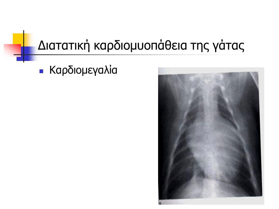 Διατατική καρδιομυοπάθεια της γάτας Καρδιομεγαλία