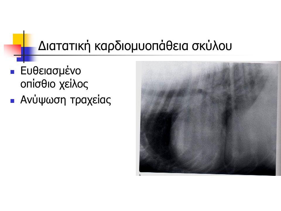 Διατατική καρδιομυοπάθεια σκύλου Ευθειασμένο οπίσθιο χείλος Ανύψωση τραχείας