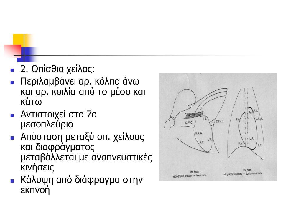 2. Οπίσθιο χείλος: Περιλαμβάνει αρ. κόλπο άνω και αρ. κοιλία από το μέσο και κάτω Αντιστοιχεί στο 7ο μεσοπλεύριο Απόσταση μεταξύ οπ. χείλους και διαφρ