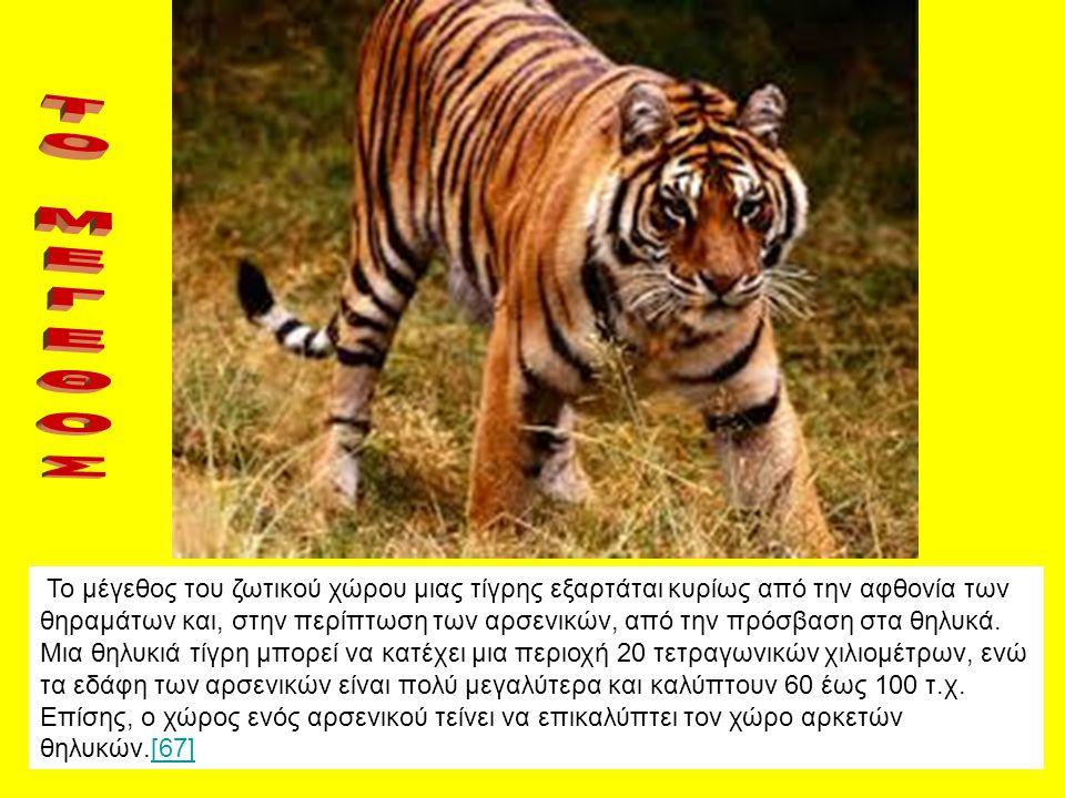 Το μέγεθος του ζωτικού χώρου μιας τίγρης εξαρτάται κυρίως από την αφθονία των θηραμάτων και, στην περίπτωση των αρσενικών, από την πρόσβαση στα θηλυκά
