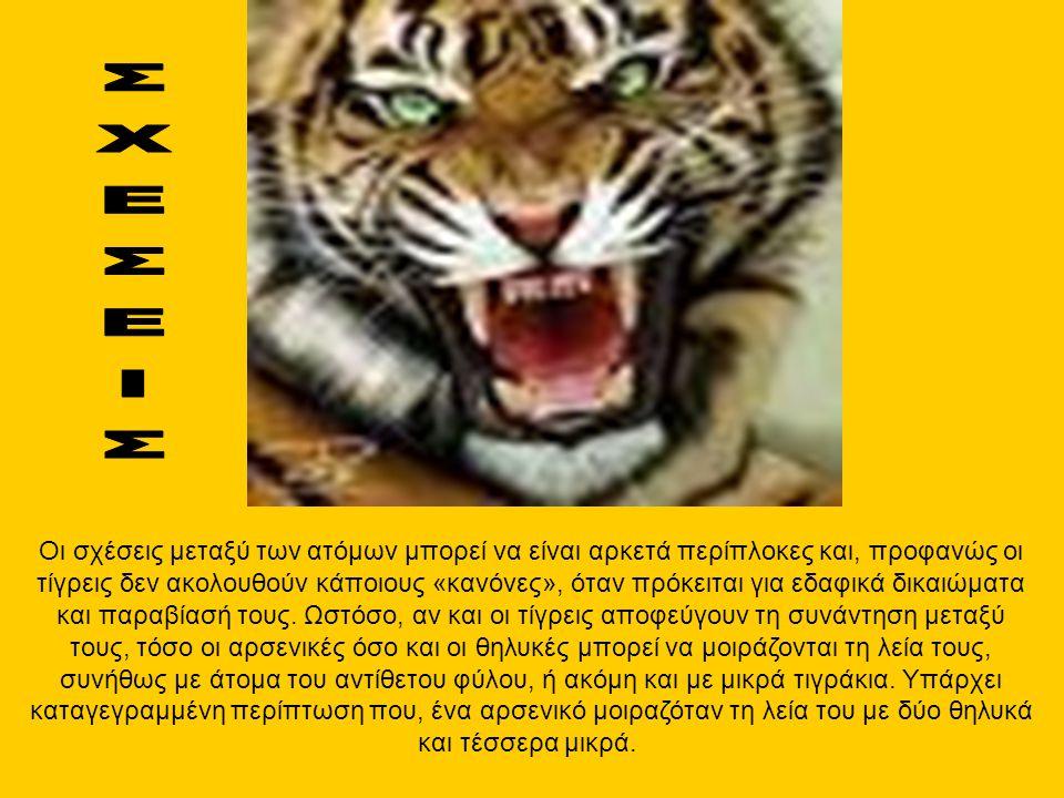 Οι σχέσεις μεταξύ των ατόμων μπορεί να είναι αρκετά περίπλοκες και, προφανώς οι τίγρεις δεν ακολουθούν κάποιους «κανόνες», όταν πρόκειται για εδαφικά