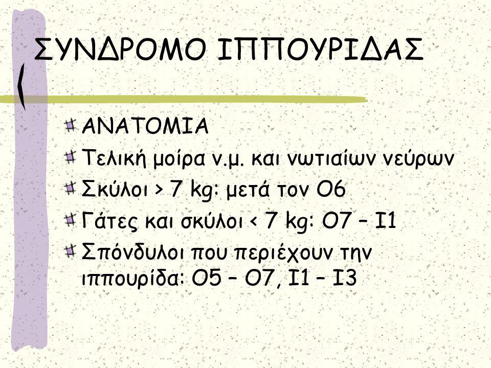 ΣΥΝΔΡΟΜΟ ΙΠΠΟΥΡΙΔΑΣ ΑΝΑΤΟΜΙΑ Τελική μοίρα ν.μ. και νωτιαίων νεύρων Σκύλοι > 7 kg: μετά τον Ο6 Γάτες και σκύλοι < 7 kg: Ο7 – Ι1 Σπόνδυλοι που περιέχουν
