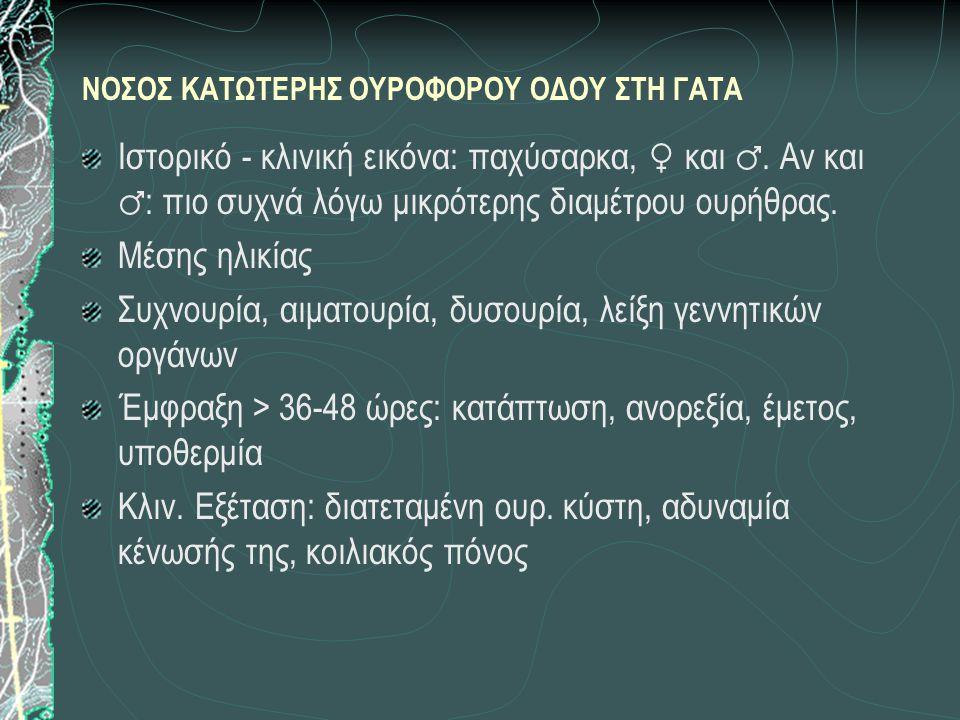 ΝΟΣΟΣ ΚΑΤΩΤΕΡΗΣ ΟΥΡΟΦΟΡΟΥ ΟΔΟΥ ΣΤΗ ΓΑΤΑ Ιστορικό - κλινική εικόνα: παχύσαρκα, ♀ και ♂. Αν και ♂ : πιο συχνά λόγω μικρότερης διαμέτρου ουρήθρας. Μέσης
