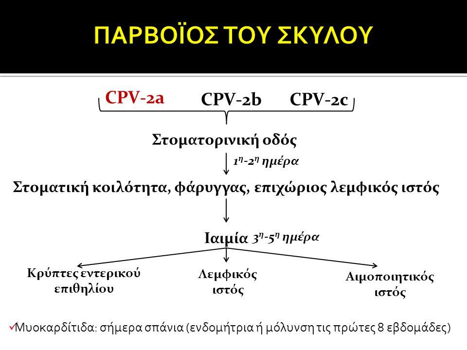 CPV-2a CPV-2bCPV-2c Στοματορινική οδός Στοματική κοιλότητα, φάρυγγας, επιχώριος λεμφικός ιστός Ιαιμία 1 η -2 η ημέρα 3 η -5 η ημέρα Κρύπτες εντερικού επιθηλίου Λεμφικός ιστός Αιμοποιητικός ιστός Μυοκαρδίτιδα: σήμερα σπάνια (ενδομήτρια ή μόλυνση τις πρώτες 8 εβδομάδες)