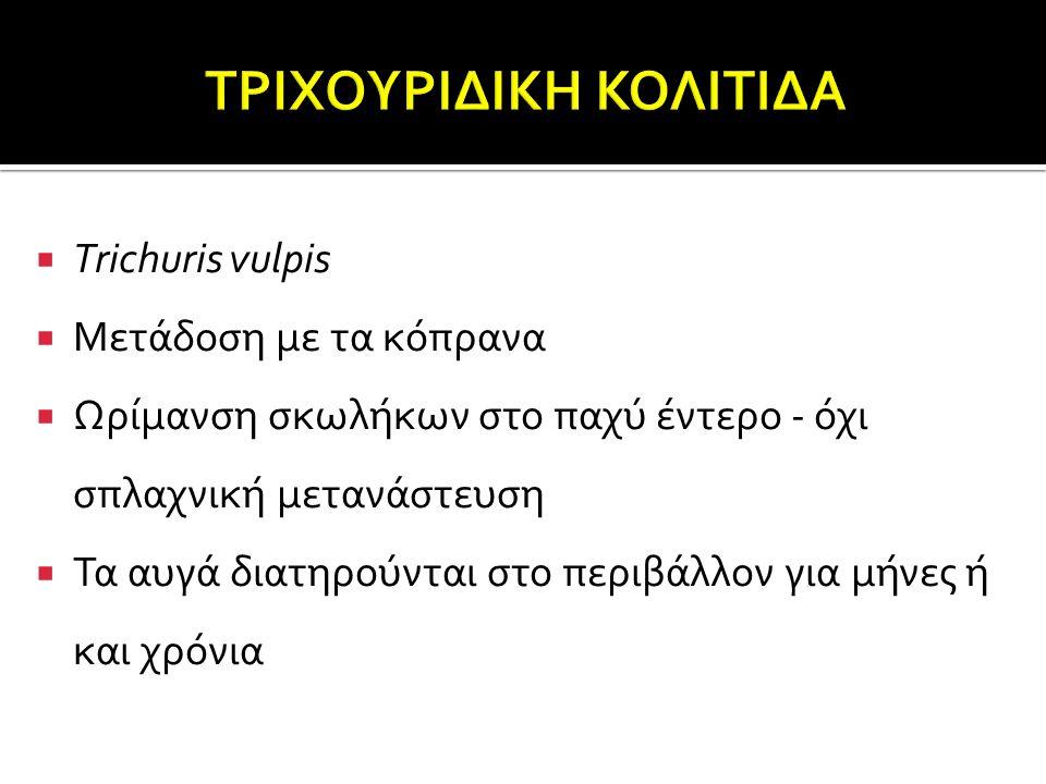  Trichuris vulpis  Μετάδοση με τα κόπρανα  Ωρίμανση σκωλήκων στο παχύ έντερο - όχι σπλαχνική μετανάστευση  Τα αυγά διατηρούνται στο περιβάλλον για μήνες ή και χρόνια