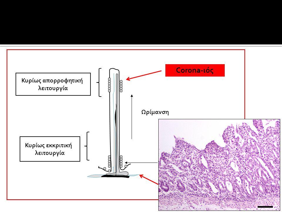  Οξεία εντερίτιδα: υδαρής διάρροια ποικίλης έντασης  Χρόνια εντερίτιδα: απώλεια πρωτεϊνών, κακή θρεπτική κατάσταση