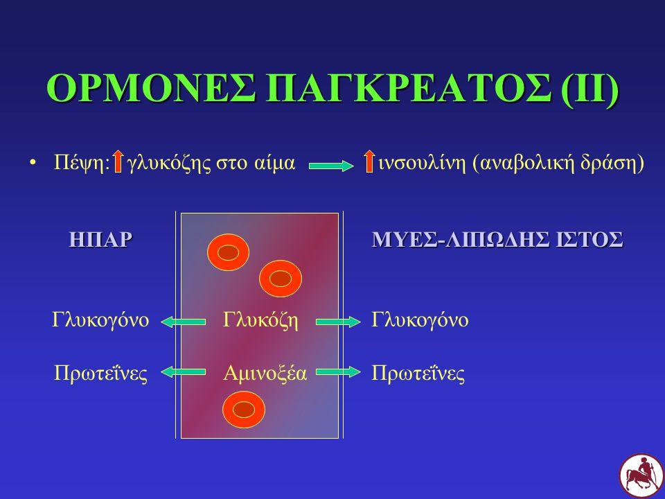 ΟΡΜΟΝΕΣ ΠΑΓΚΡΕΑΤΟΣ (ΙΙ) Πέψη: γλυκόζης στο αίμα ινσουλίνη (αναβολική δράση) ΗΠΑΡ Γλυκογόνο Πρωτεΐνες Γλυκόζη Αμινοξέα ΜΥΕΣ-ΛΙΠΩΔΗΣ ΙΣΤΟΣ Γλυκογόνο Πρω