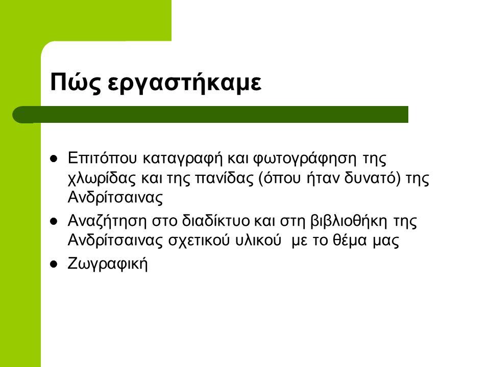 Περιβαλλοντικό πρόγραμμα 2008-2009  ΧΛΩΡΙΔΑ ΚΑΙ ΠΑΝΙΔΑ ΑΝΔΡΙΤΣΑΙΝΑΣ Καπιζιώνη Ξένια Καπιζιώνης Θησέας Κιούση Φωτεινή Γιαννοπούλου Χριστίνα Βασιλόπουλ