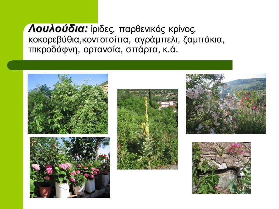 Φυτά: ρεμπένικο(ενδημικό), μυρόνι, λαψάνα, βοϊδόγλωσσα, στριφούλι, βούρλα, κάρδαμο, φλουσκούνι, μελισσόχορτο κ.ά. Τα χόρτα που είχαμε μαζέψει για φωτο