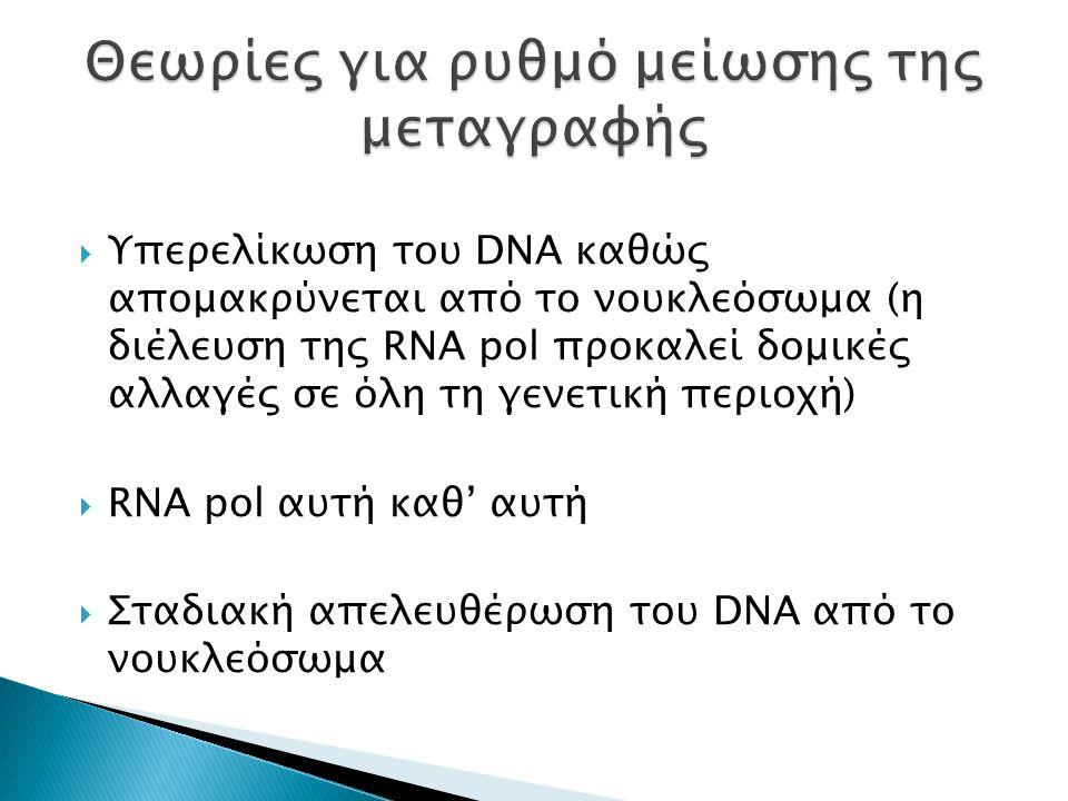  Υπερελίκωση του DNA καθώς απομακρύνεται από το νουκλεόσωμα (η διέλευση της RNA pol προκαλεί δομικές αλλαγές σε όλη τη γενετική περιοχή)  RNA pol αυτή καθ' αυτή  Σταδιακή απελευθέρωση του DNA από το νουκλεόσωμα