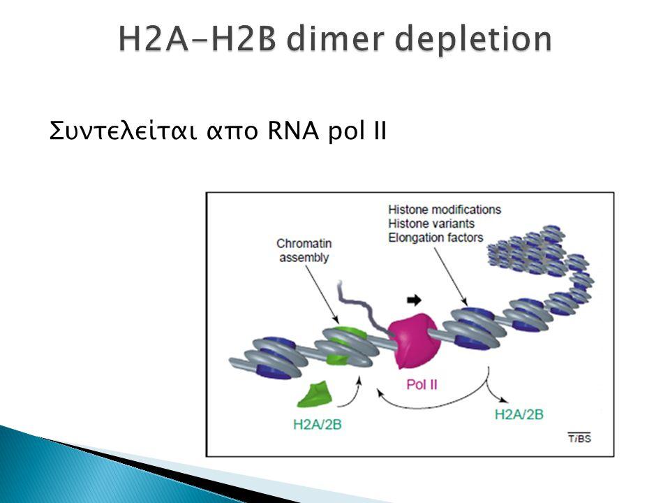 Συντελείται απο RNA pol II