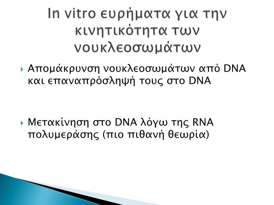  Απομάκρυνση νουκλεοσωμάτων από DNA και επαναπρόσληψή τους στο DNA  Μετακίνηση στο DNA λόγω της RNA πολυμεράσης (πιο πιθανή θεωρία)