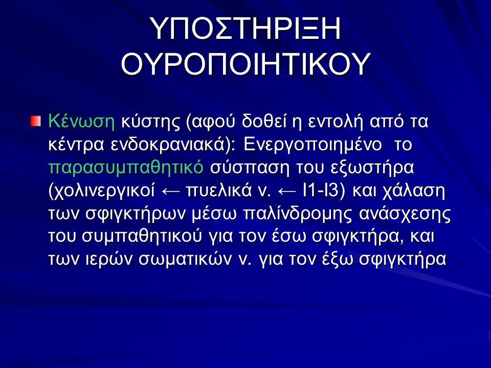 ΥΠΟΣΤΗΡΙΞΗ ΟΥΡΟΠΟΙΗΤΙΚΟΥ Κένωση κύστης (αφού δοθεί η εντολή από τα κέντρα ενδοκρανιακά): Ενεργοποιημένο το παρασυμπαθητικό σύσπαση του εξωστήρα (χολινεργικοί ← πυελικά ν.