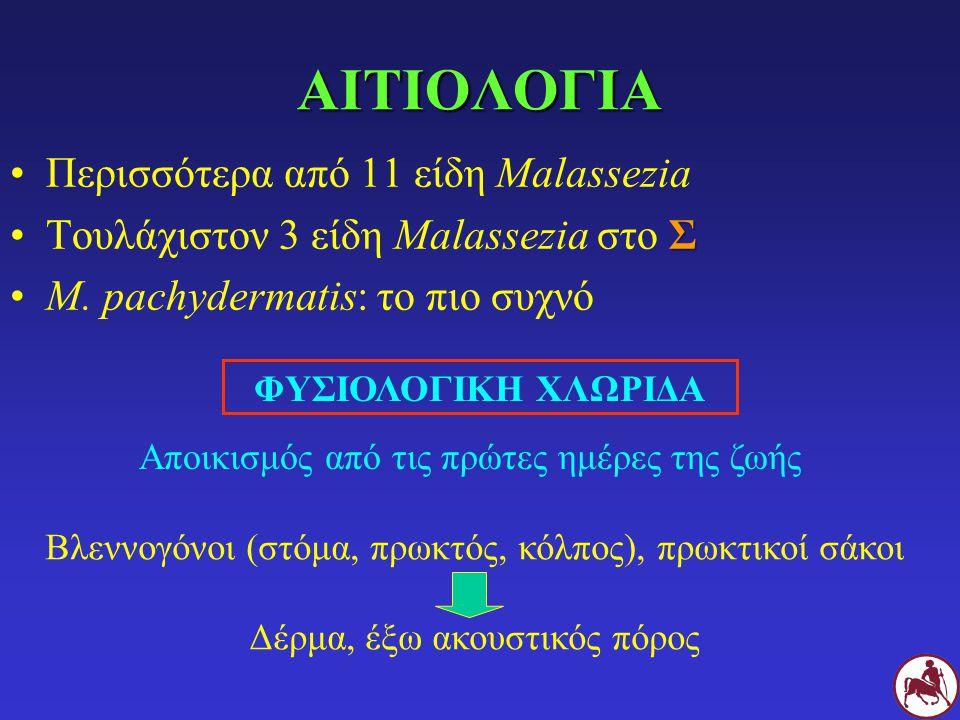ΑΙΤΙΟΛΟΓΙΑ Περισσότερα από 11 είδη Malassezia ΣΤουλάχιστον 3 είδη Malassezia στο Σ M. pachydermatis: το πιο συχνό ΦΥΣΙΟΛΟΓΙΚΗ ΧΛΩΡΙΔΑ Αποικισμός από τ