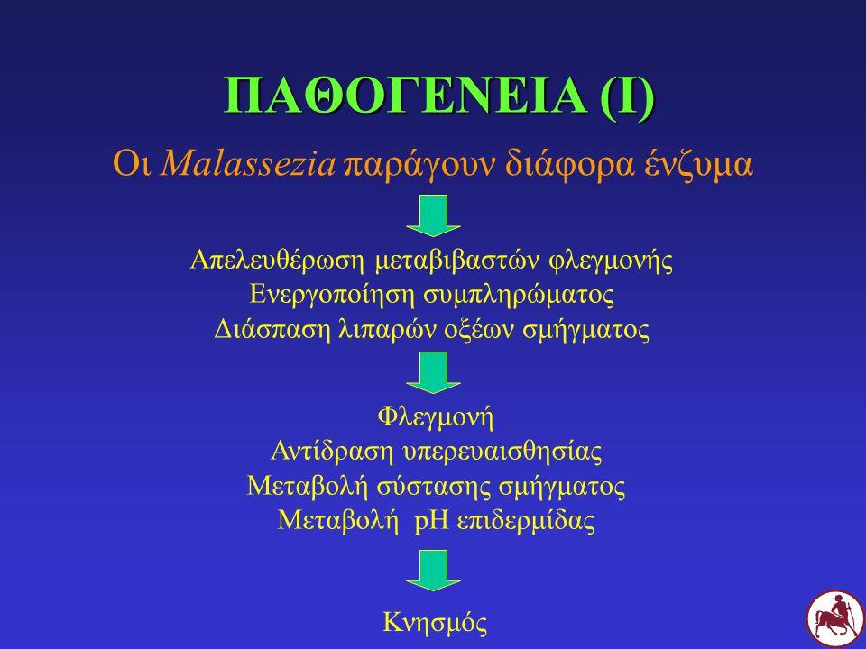ΠΑΘΟΓΕΝΕΙΑ (Ι) Οι Malassezia παράγουν διάφορα ένζυμα Απελευθέρωση μεταβιβαστών φλεγμονής Ενεργοποίηση συμπληρώματος Διάσπαση λιπαρών οξέων σμήγματος Φλεγμονή Αντίδραση υπερευαισθησίας Μεταβολή σύστασης σμήγματος Μεταβολή pH επιδερμίδας Κνησμός