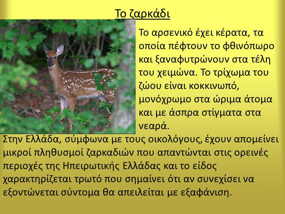 Το ζαρκάδι Στην Ελλάδα, σύμφωνα με τους οικολόγους, έχουν απομείνει μικροί πληθυσμοί ζαρκαδιών που απαντώνται στις ορεινές περιοχές της Ηπειρωτικής Ελλάδας και το είδος χαρακτηρίζεται τρωτό που σημαίνει ότι αν συνεχίσει να εξοντώνεται σύντομα θα απειλείται με εξαφάνιση.
