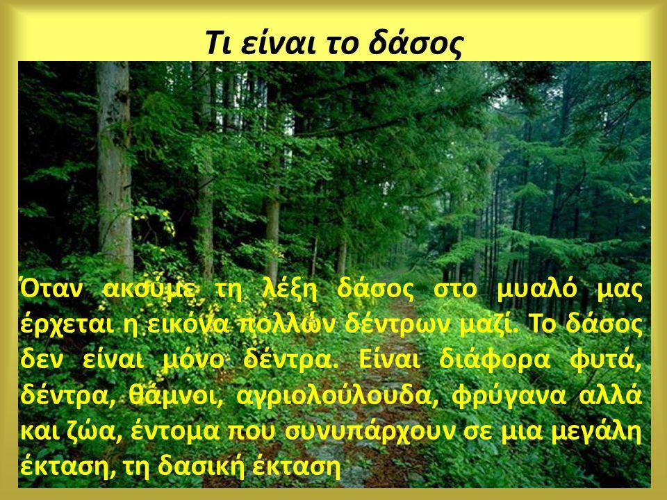 Τι είναι το δάσος Όταν ακούμε τη λέξη δάσος στο μυαλό μας έρχεται η εικόνα πολλών δέντρων μαζί. Το δάσος δεν είναι μόνο δέντρα. Είναι διάφορα φυτά, δέ