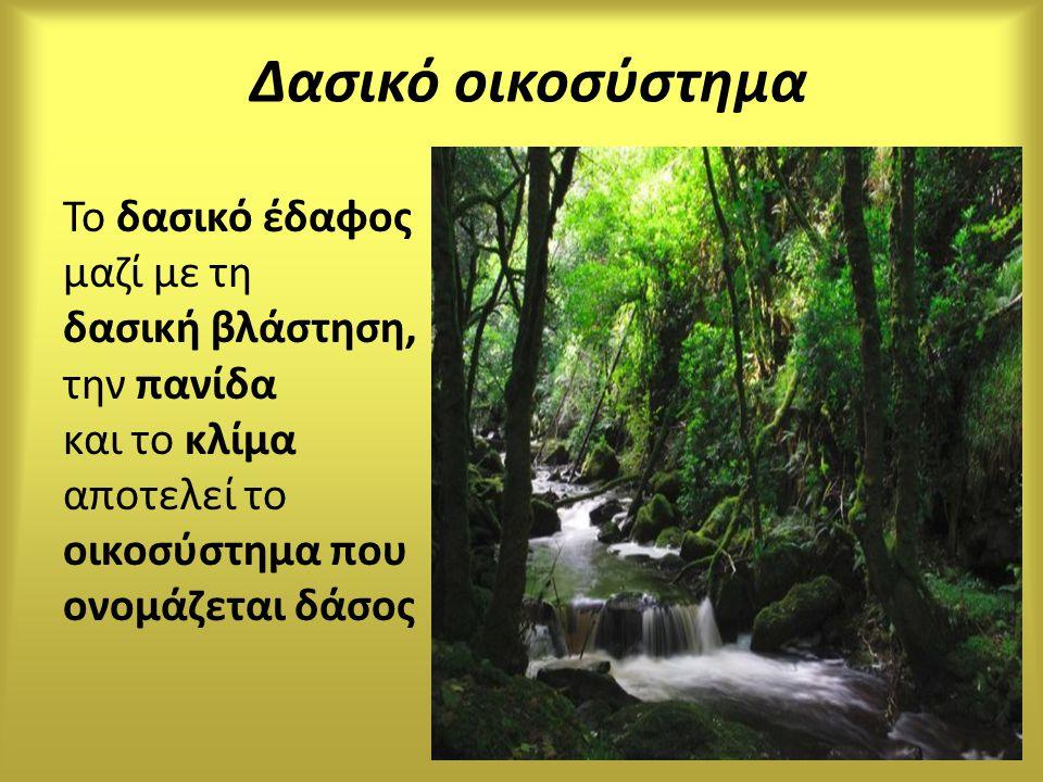 Δασικό οικοσύστημα Το δασικό έδαφος μαζί με τη δασική βλάστηση, την πανίδα και το κλίμα αποτελεί το οικοσύστημα που ονομάζεται δάσος