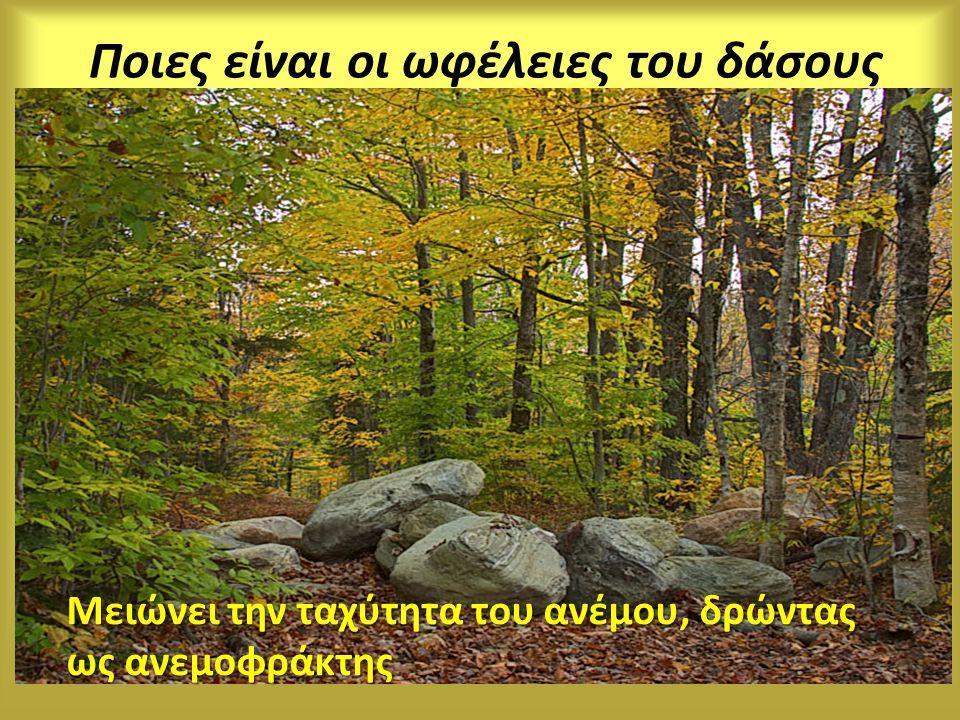 Μειώνει την ταχύτητα του ανέμου, δρώντας ως ανεμοφράκτης Ποιες είναι οι ωφέλειες του δάσους