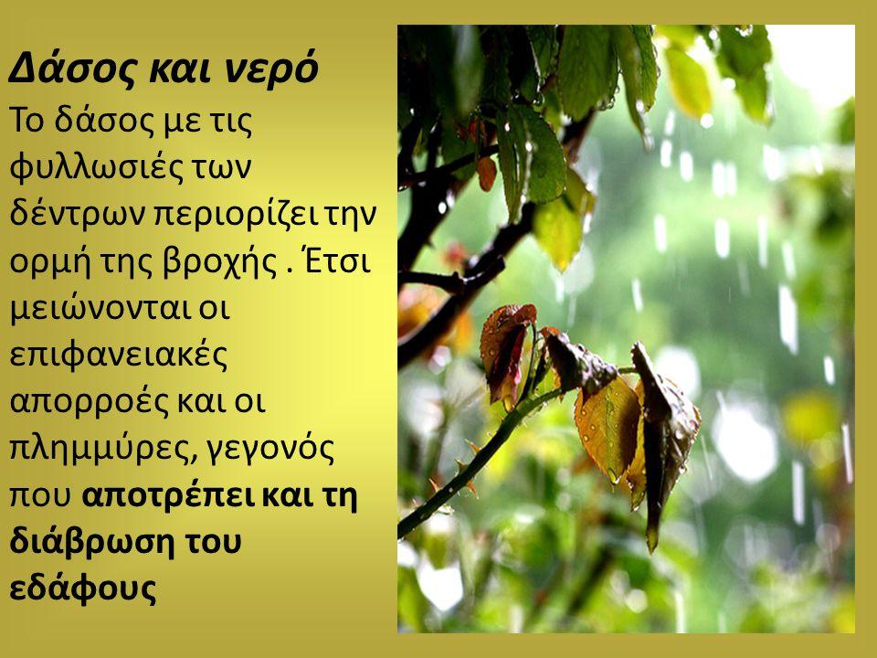 Δάσος και νερό Το δάσος με τις φυλλωσιές των δέντρων περιορίζει την ορμή της βροχής. Έτσι μειώνονται οι επιφανειακές απορροές και οι πλημμύρες, γεγονό