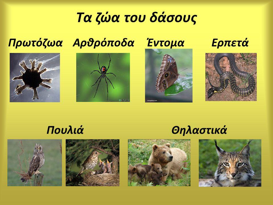 Τα ζώα του δάσους Πρωτόζωα Αρθρόποδα Έντομα Ερπετά Πουλιά Θηλαστικά