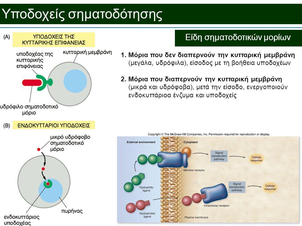 Υποδοχείς σηματοδότησης Είδη σηματοδοτικών μορίων 1.Μόρια που δεν διαπερνούν την κυτταρική μεμβράνη (μεγάλα, υδρόφιλα), είσοδος με τη βοήθεια υποδοχέων 2.Μόρια που διαπερνούν την κυτταρική μεμβράνη (μικρά και υδρόφοβα), μετά την είσοδο, ενεργοποιούν ενδοκυττάριοα ένζυμα και υποδοχείς