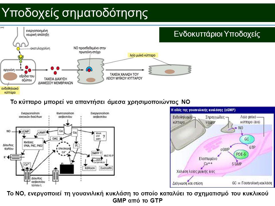 Υποδοχείς σηματοδότησης Ενδοκυττάριοι Υποδοχείς Το κύτταρο μπορεί να απαντήσει άμεσα χρησιμοποιώντας NO To NO, ενεργοποιεί τη γουανιλική κυκλάση το οποίο καταλύει το σχηματισμό του κυκλικού GMP από το GTP