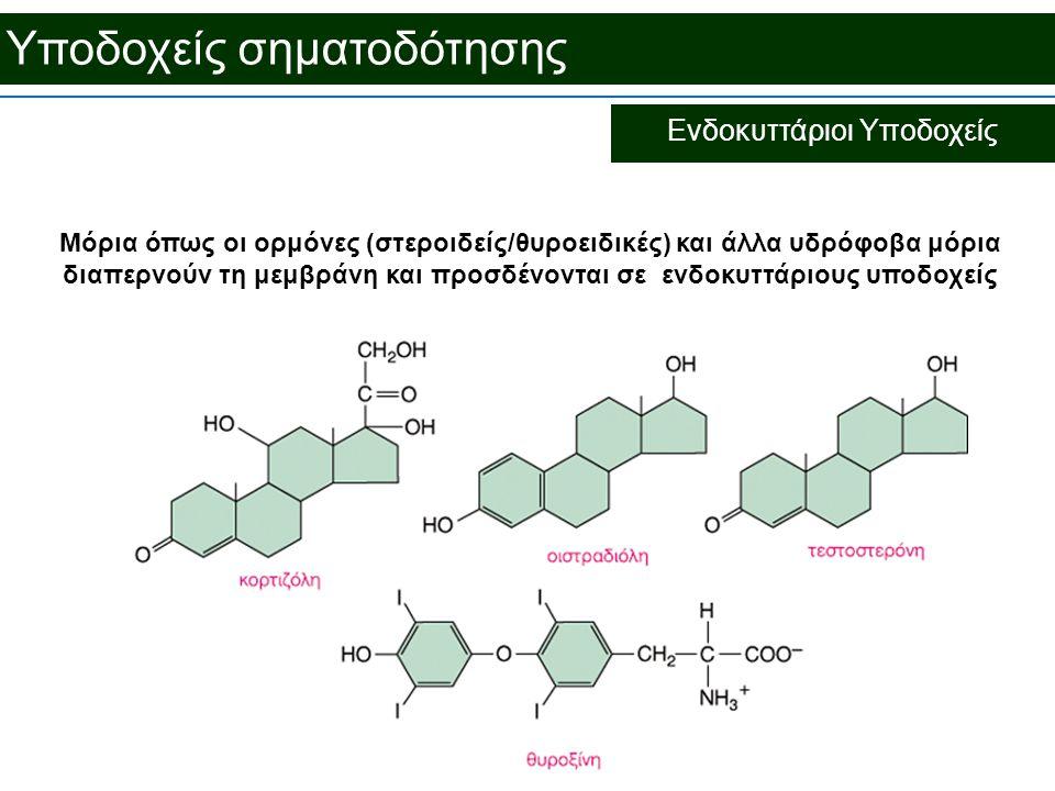 Υποδοχείς σηματοδότησης Ενδοκυττάριοι Υποδοχείς Μόρια όπως οι ορμόνες (στεροιδείς/θυροειδικές) και άλλα υδρόφοβα μόρια διαπερνούν τη μεμβράνη και προσδένονται σε ενδοκυττάριους υποδοχείς