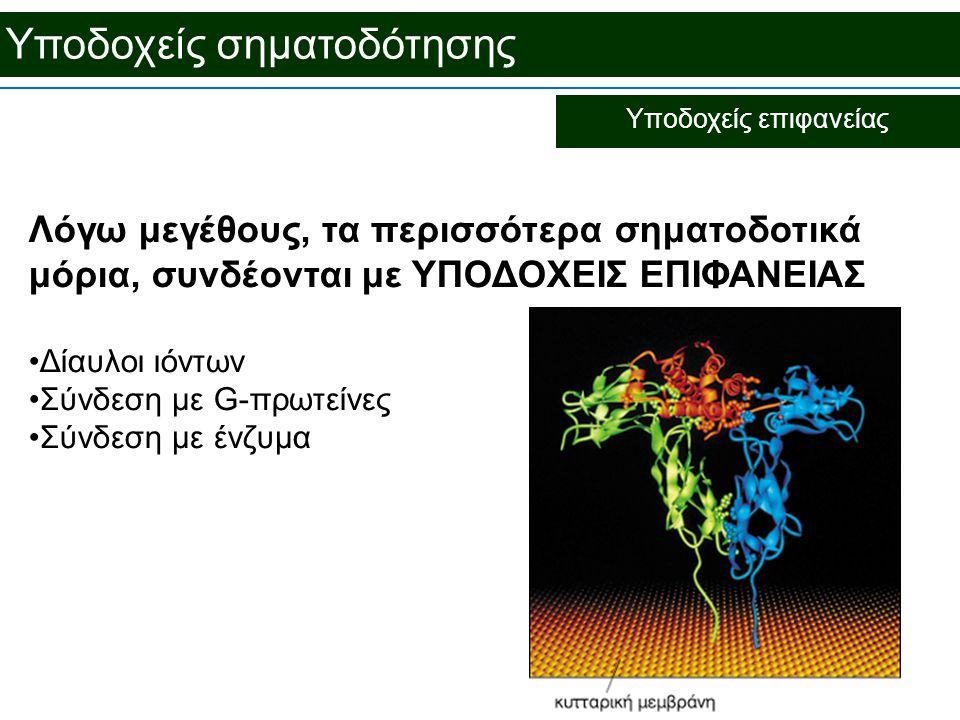 Υποδοχείς σηματοδότησης Υποδοχείς επιφανείας Λόγω μεγέθους, τα περισσότερα σηματοδοτικά μόρια, συνδέονται με ΥΠΟΔΟΧΕΙΣ ΕΠΙΦΑΝΕΙΑΣ Δίαυλοι ιόντων Σύνδεση με G-πρωτείνες Σύνδεση με ένζυμα
