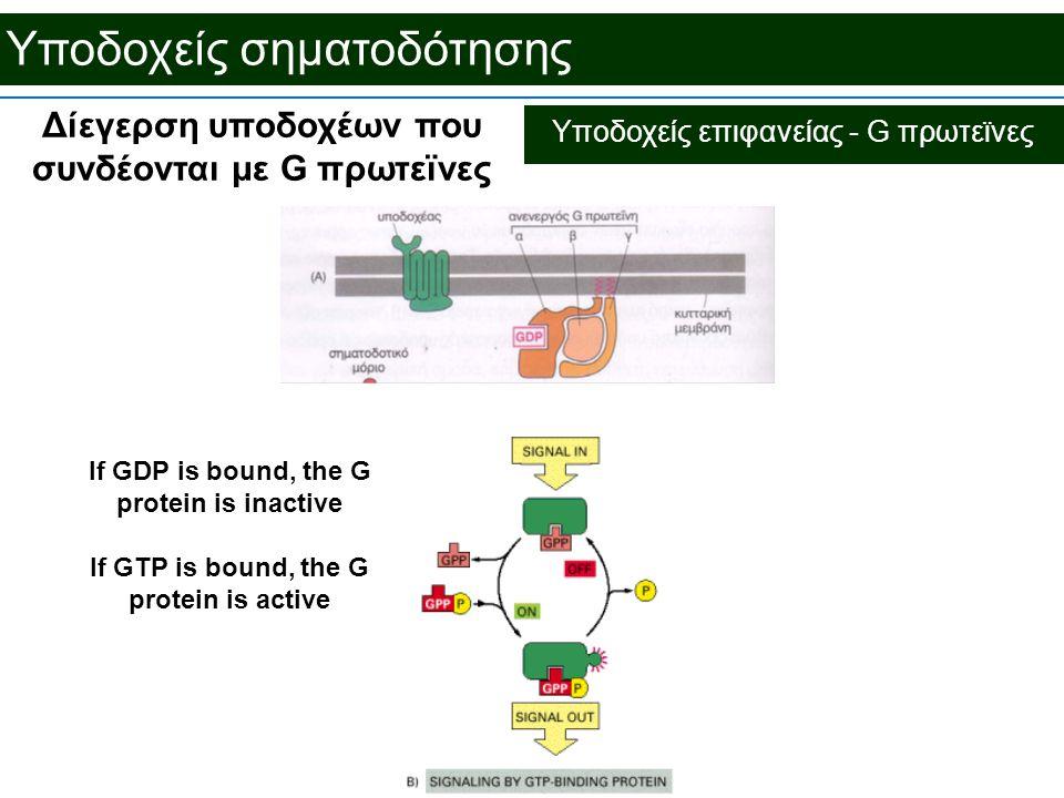 Υποδοχείς σηματοδότησης Δίεγερση υποδοχέων που συνδέονται με G πρωτεϊνες If GDP is bound, the G protein is inactive If GTP is bound, the G protein is active Υποδοχείς επιφανείας - G πρωτεϊνες