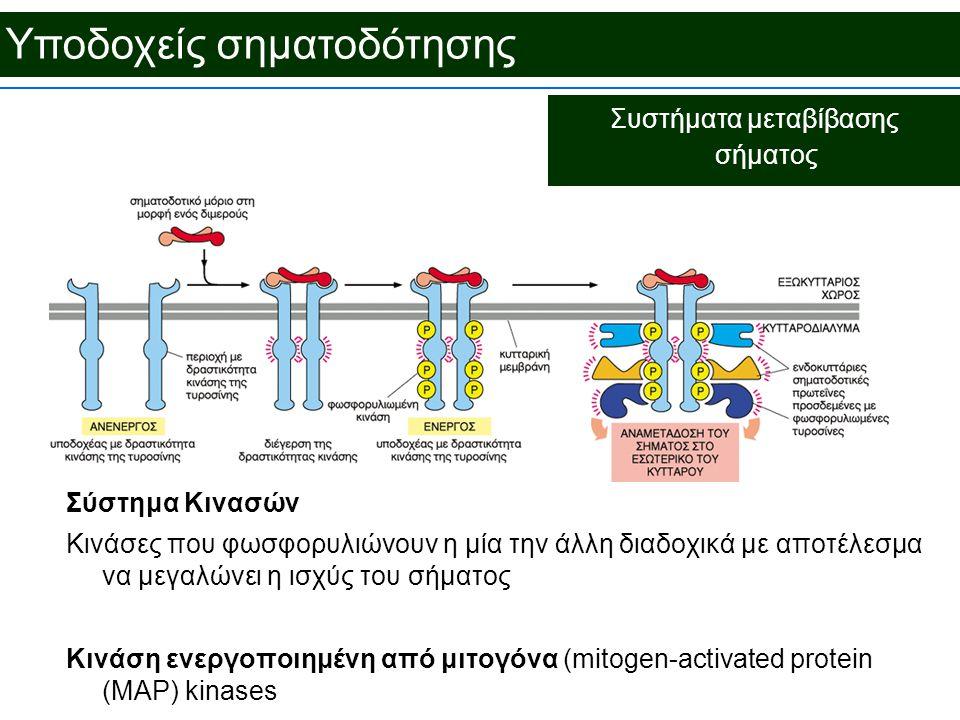 Υποδοχείς σηματοδότησης Συστήματα μεταβίβασης σήματος Σύστημα Κινασών Κινάσες που φωσφορυλιώνουν η μία την άλλη διαδοχικά με αποτέλεσμα να μεγαλώνει η ισχύς του σήματος Κινάση ενεργοποιημένη από μιτογόνα (mitogen-activated protein (MAP) kinases