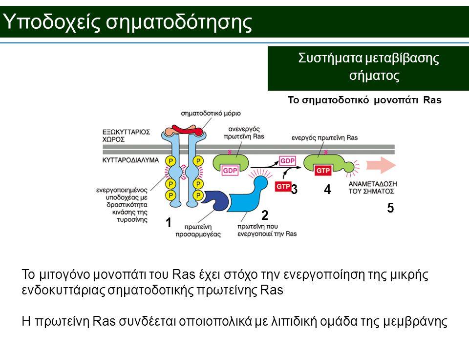 Υποδοχείς σηματοδότησης Συστήματα μεταβίβασης σήματος To σηματοδοτικό μονοπάτι Ras Το μιτογόνο μονοπάτι του Ras έχει στόχο την ενεργοποίηση της μικρής ενδοκυττάριας σηματοδοτικής πρωτείνης Ras Η πρωτείνη Ras συνδέεται οποιοπολικά με λιπιδική ομάδα της μεμβράνης 5 1 2 43