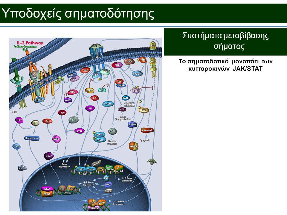 Υποδοχείς σηματοδότησης Συστήματα μεταβίβασης σήματος To σηματοδοτικό μονοπάτι των κυτταροκινών JAK/STAT